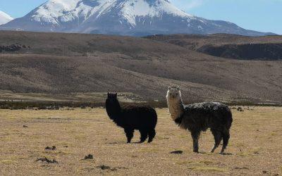 El mundo debe acabar la guerra contra la naturaleza si quiere evitar otra pandemia