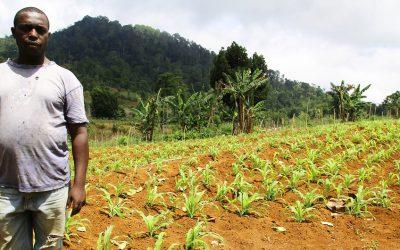 La salud, el trabajo y la comida: lo que el COVID-19 se llevó en los países más pobres