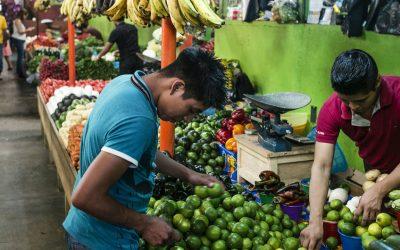 América Latina y el Caribe es clave para alimentar a 10.000 millones de personas en 2050